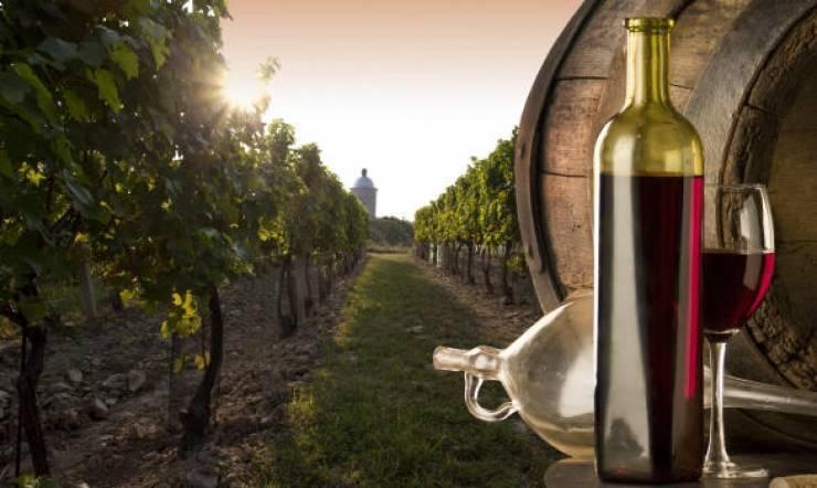 Какое вино попробовать в италии